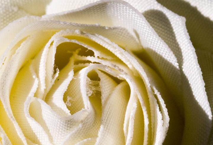En blomsts indre