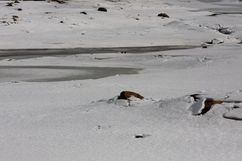 Is i elva