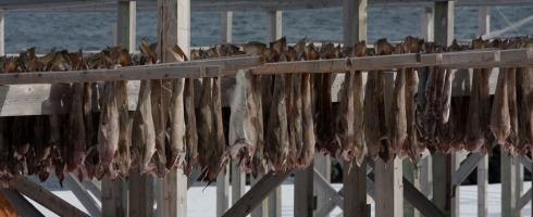 Tørking av fisk