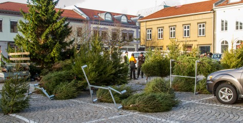 Juletrærne ligger overende