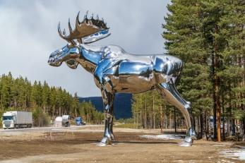 Sølvelgen på Bjøråa rasteplass